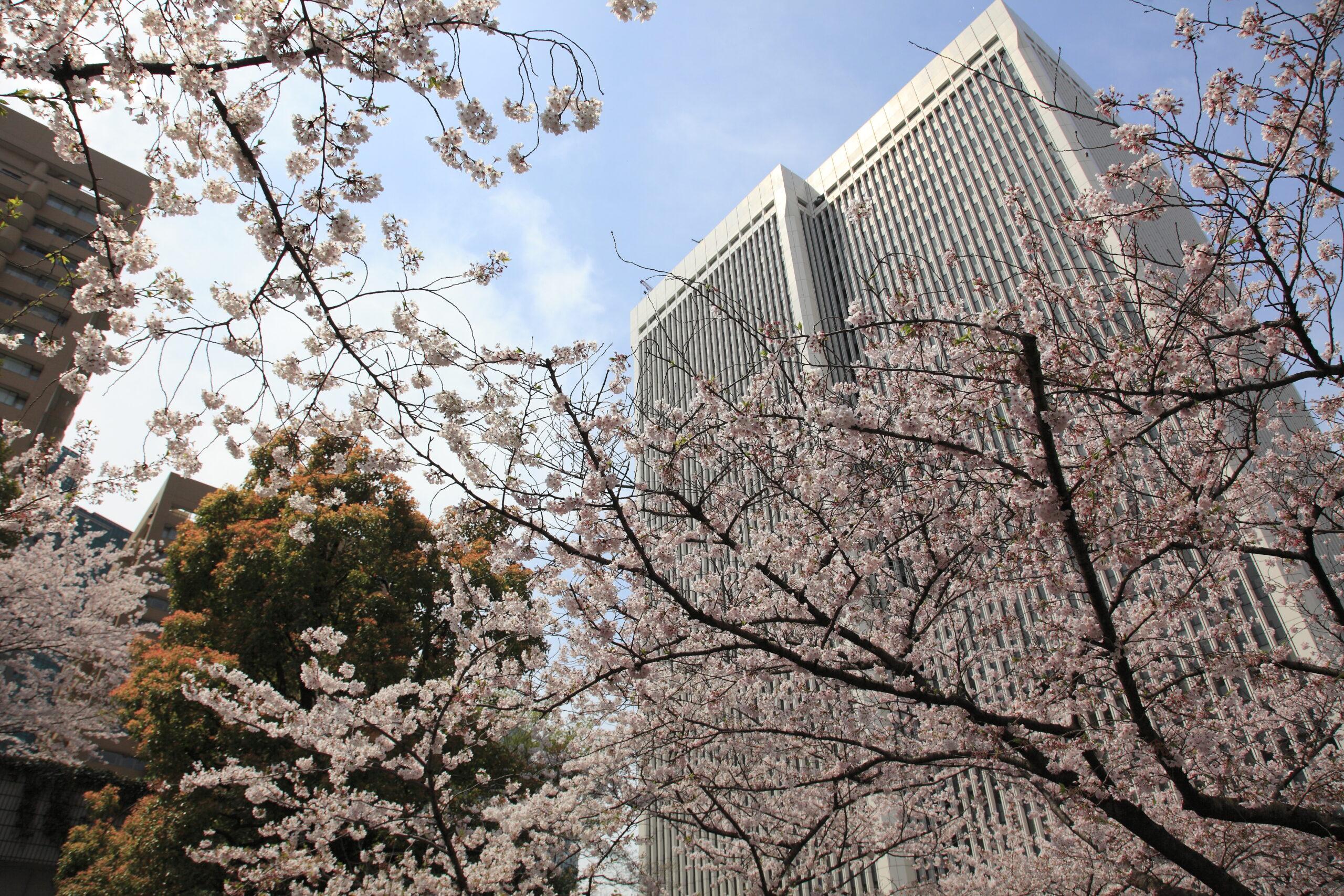 桜の名所・アークヒルズで春の味覚 「さくらグルメフェア2021」開催 テイクアウトでも楽しめる20品以上をラインナップ
