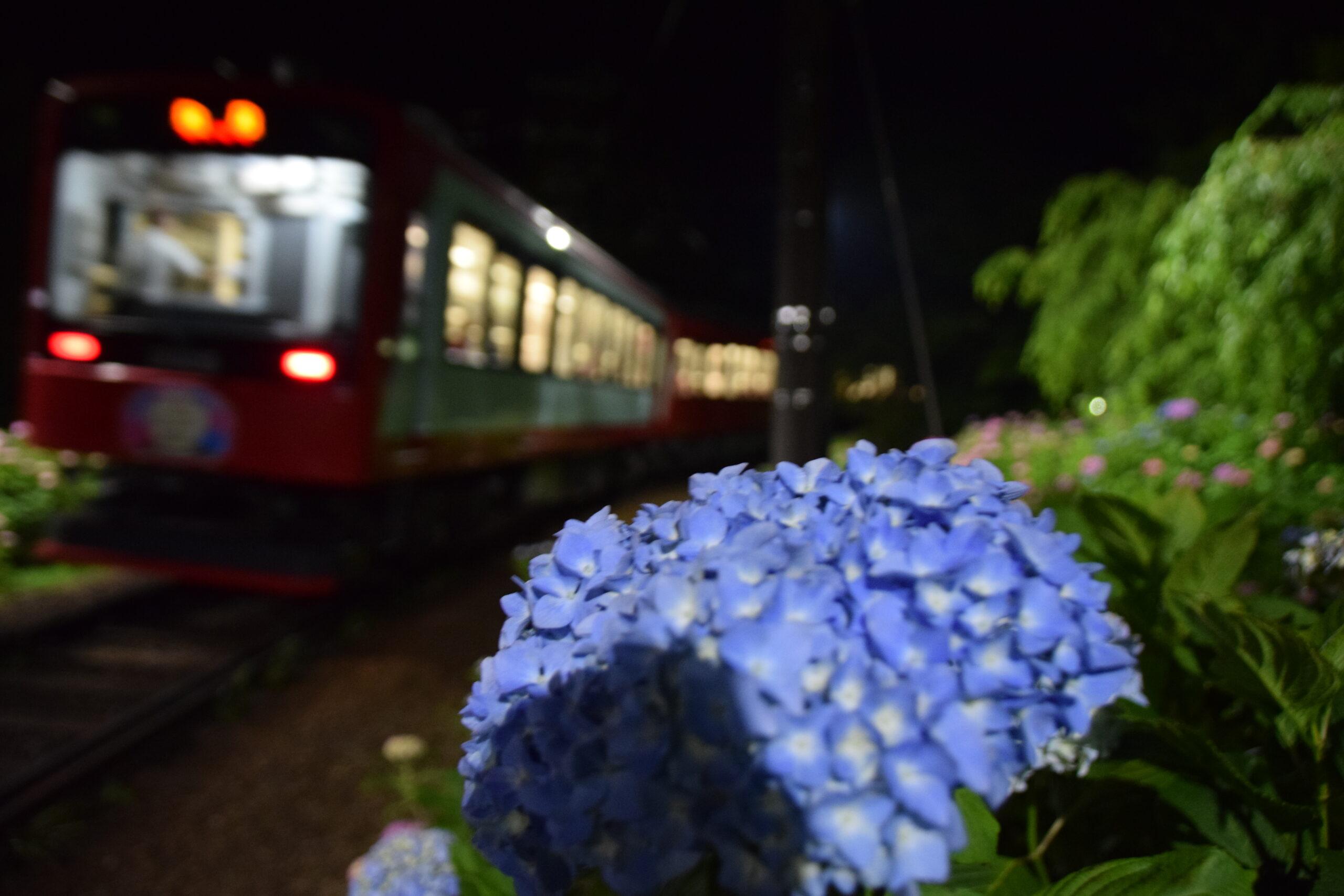 箱根あじさい電車の歴史 ― 2021年は2年ぶりに夜間ライトアップの実施が決定!《初夏の箱根の風物詩》